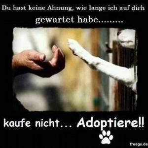 Adoptiere